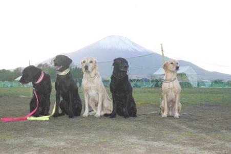 親戚 富士山