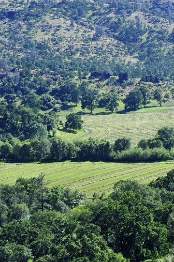 blog 43 Auburn to Weeds on 5N, Mt. Lassen 134E, Hay Field, CA 2_DSC0074-4.25.16.(2).jpg