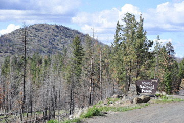 blog 47 Prineville, Ochoco NF, Leaving, OR_DSC0574-4.30.16.(2).jpg