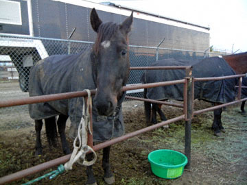 blog (6x4.5@300) Yoko CP3 Jeff Shearer's Family, Horses, Oakdale_DSCN4343-4.5.17.jpg