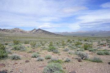blog 13 95S-178W, Shoshone to Badwater, Sagebrush & Creosote Bush, CA_DSC7318-3.31.17.jpg
