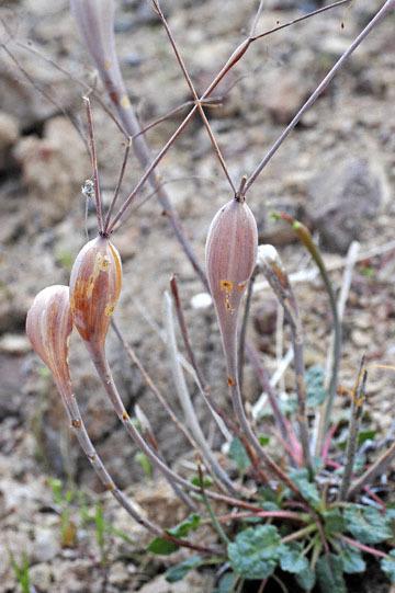 blog 13 95S-178W, Shoshone to Badwater, Salsbury Pass @3315