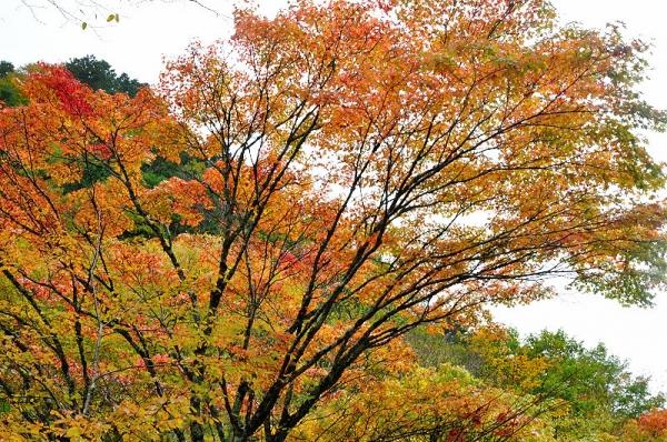 5小田深山17.10.28