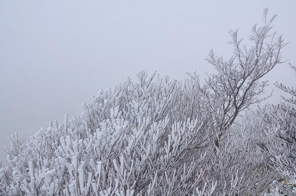 6中津明神山17.12.11