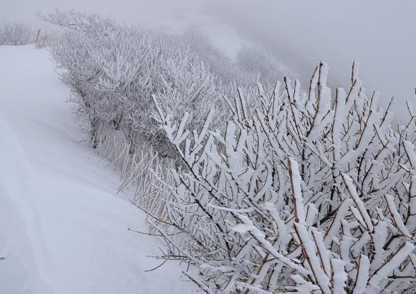 5中津明神山17.12.11