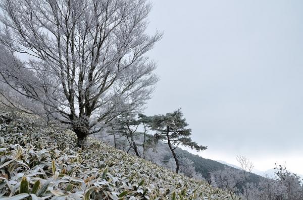 2中津明神山17.12.29