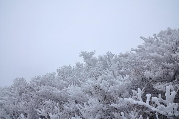 10中津明神山17.12.29