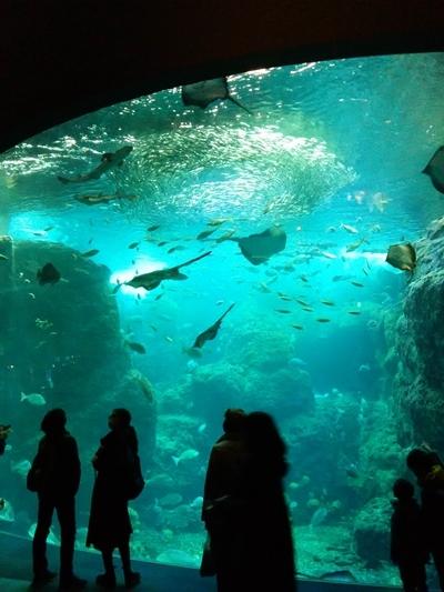 新江ノ島水族館水槽