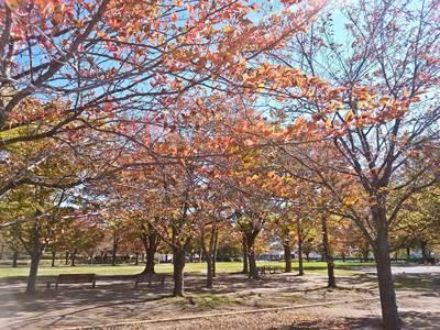 緑ヶ丘スポーツ公園 秋